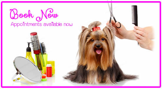 How To Become A Dog Groomer Uk